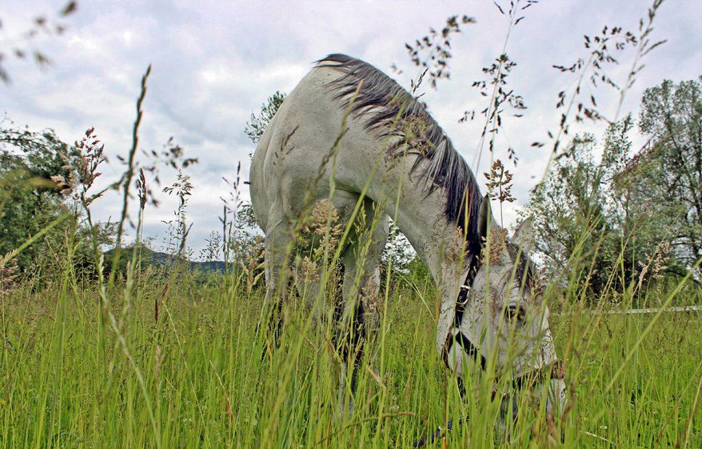 Oskrba konj
