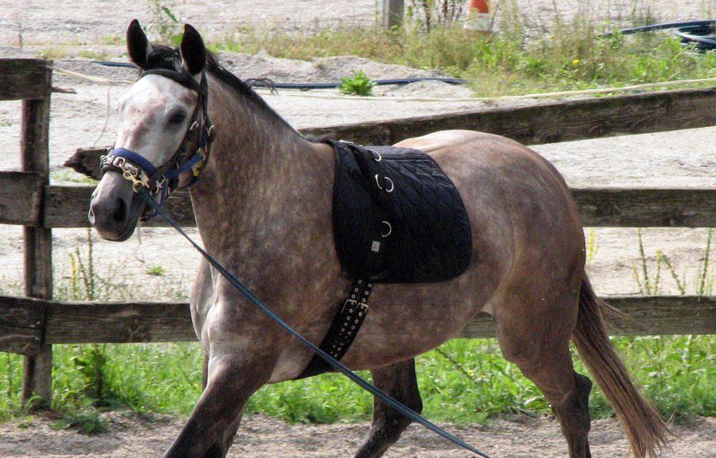 Ujahovanje in korekcija konj